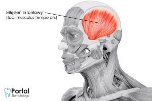 Mięsień skroniowy (łac. musculus temporalis)